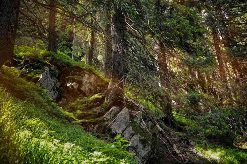 Song na tento víkend: příroda